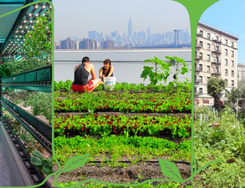 کشاورزی شهری (Urban Farming)- قسمت ۳: مزایا، معایب و جمع بندی